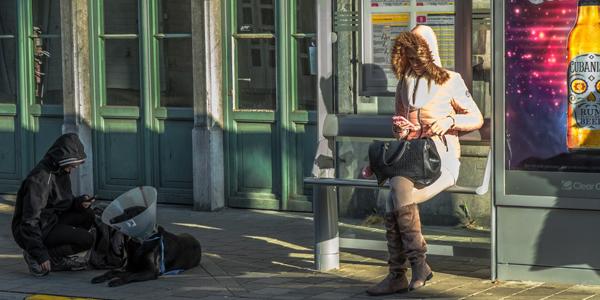Poble Democràtic demana que Valéncia permeta que els animals domèstics puguen usar el transport públic urbà